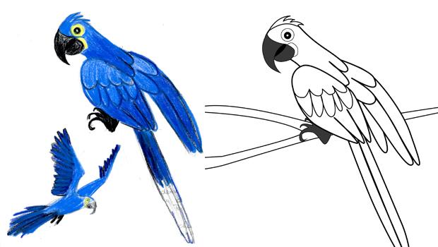 Comment dessiner un ara hyacinthe les carnets de c leste - Dessiner un perroquet ...